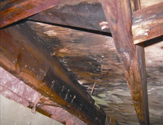 mold and rot in a Roanoke crawl space